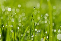 Как вывести пятно от травы